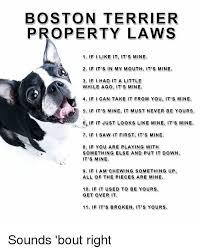 Boston Terrier Meme - boston terrier property laws 1 if i like it it s mine 2 if it s in