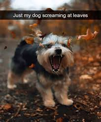 Animal Memes Funny - 40 funny animal memes funnydogs make me happy