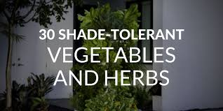 Shade Garden Vegetables by How To Grow A Stellar Garden Even In The Shade