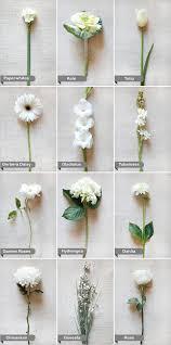 white flower guide white wedding flowers flower and white flowers