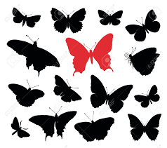 butterfly net images u0026 stock pictures royalty free butterfly net