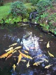 How To Make Backyard Pond by 4553 Best Favorite Ponds And Things Images On Pinterest Garden