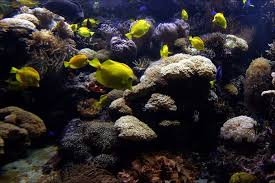 Buy Ornamental Fish Fish Aquariumpros Inc Minnesota