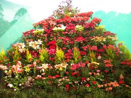 6 must attend flower festivals of india waytoindia com
