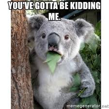You Gotta Be Kidding Me Meme - you ve gotta be kidding me surprised koala meme generator
