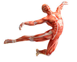Anatomy And Physiology Songs Musculoskeletal Anatomy For Performers A Workshop Seriescity Limits