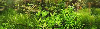 Aquascape Aquarium Plants 5 Reasons Why Artificial Plants Are Better Than Live Plants Home