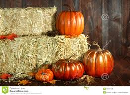 fall pumpkins background pictures fall themed scene with pumpkins on wood royalty free stock photos