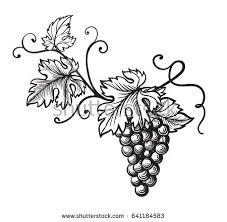 set grapes monochrome sketch hand drawn stock vector 641184583