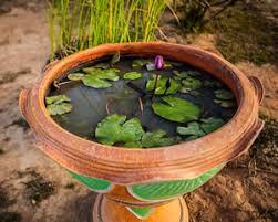 miniteich balkon miniteich anlegen pflanzen fische und überwintern