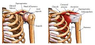 Rotator Cuff Injury From Bench Press Rotator Cuff Tear Exercises Treatments And Workouts