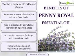 13 best benefits of pennyroyal essential oil organic facts