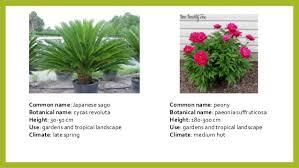 List Of Tropical Plants Names - desert plants names list