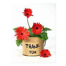 thank you flowers thank you gerbera flower pot post card zazzle