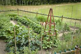 How To Keep Pests Away From Garden - how to keep critters out of your garden ways to keep animals out