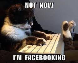 banshee cat home facebook