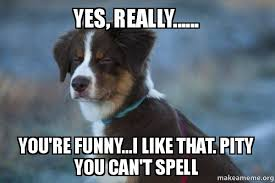 Yes This Is Dog Meme - yes really you re funny i like that pity you can t spell