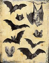 baturday botanical prints pinterest bats animal and drawings