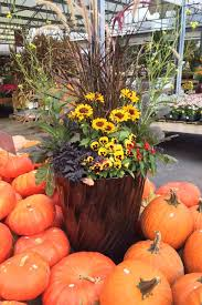 photos tips ideas for colorful fall container gardens