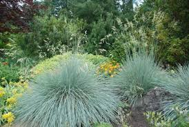 are grasses a resistant option in the high desert