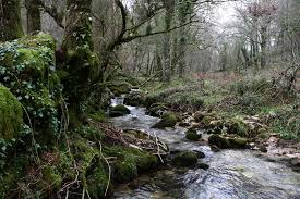 free picture nature water wood river landscape moss