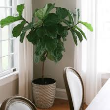 house plants for sale fast growing trees
