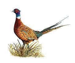 state bird of south dakota south dakota sd state bird ring necked pheasant game hunting vinyl