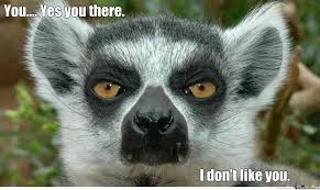 Lemur Meme - lemur is not amused by recyclebin meme center