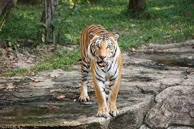 Arkansas wildlife tours images Turpentine creek wildlife refuge animal habitats tours jpg