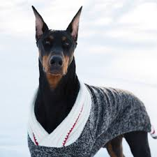 pet sweaters sweaters handwoven