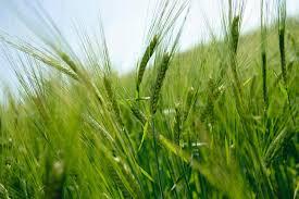 zahlungsansprüche landwirtschaft zahlungsansprüche nach der gap reform 2003 steuern haufe