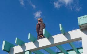 How To Get Rid Of Pigeons Off My Roof by How Visual Bird Deterrents Keep Pest Birds Away Bird B Gone Blog