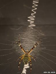 Decorative Spiders Bbc Nature Decorative Spider Webs Attract Dinner