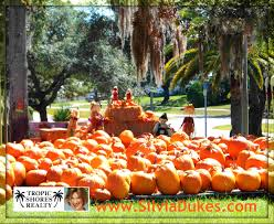 Local Pumpkin Farms In Nj by Pumpkin Patches In Spring Hill Florida