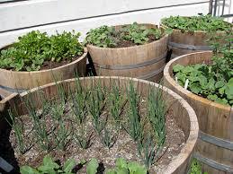 wine barrel vegetable garden to do pinterest vegetable