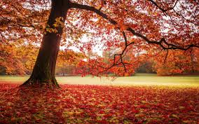 morning blossom wallpapers wallpaper sunlight trees landscape fall leaves nature red