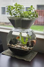 i invented this the goldfish garden self cleaning aquaponic