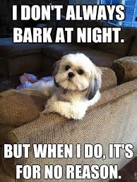 But When I Do Meme - i don t always bark at night but when i do