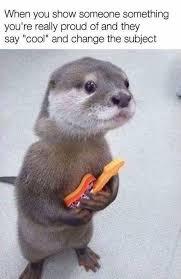 Sea Otter Meme - otter meme my favorite daily things