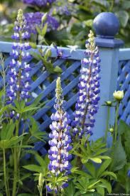 decoration jardin marocain les 25 meilleures idées de la catégorie jardin bleu sur pinterest