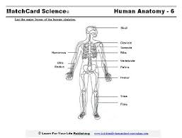 Human Anatomy Worksheet Human Skeleton Bones Worksheet U2013 Cultua Info