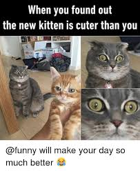 Funny Kitten Meme - when you found out the new kitten is cuter than you will make your