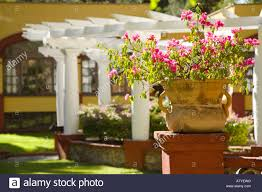 mexico guanajuato flowers in terra cotta pot white pergola in
