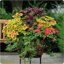Flowering Patio Plants 35 Beautiful Container Gardens Container Gardening Plants And