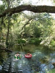Florida rivers images Second to only the mighty suwannee river natural north florida 39 s jpg