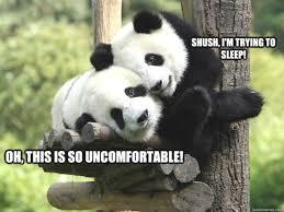 Panda Meme - 15 cutest panda memes which ruled the internet viral slacker