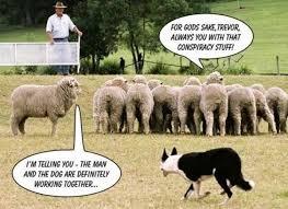 Border Collie Meme - border collies gather for epic doggie do as 576 ca the ebay