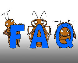 What Temperature Do Bed Bugs Die Bed Bugs Limited Frequently Asked Questions