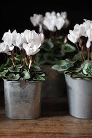 best 10 winter container gardening ideas on pinterest winter