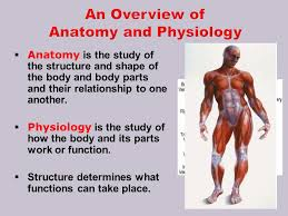 Anatomy And Physiology Place Unit 13 Body Systems Ppt Video Online Download